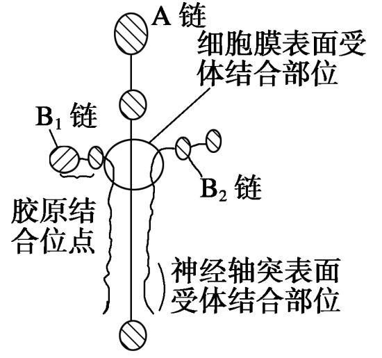 试题细胞结构专题练习