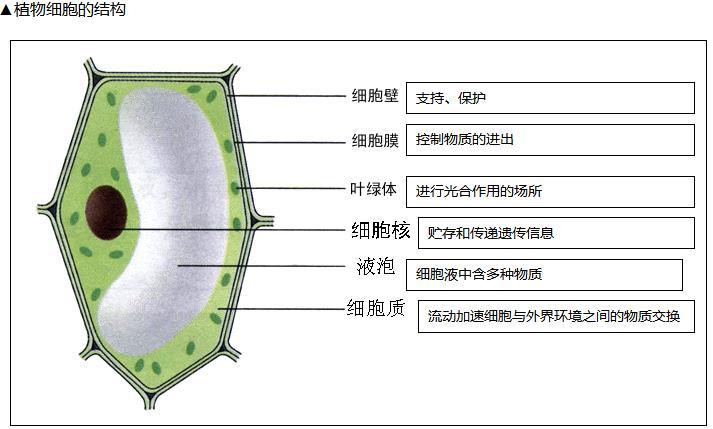中考 吉林中考 吉林中考生物  ▲ 植物细胞与动物细胞的相同点:都有细