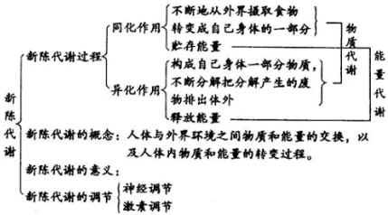 电路 电路图 电子 原理图 429_238