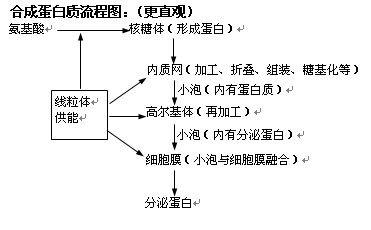 植物分类结构图