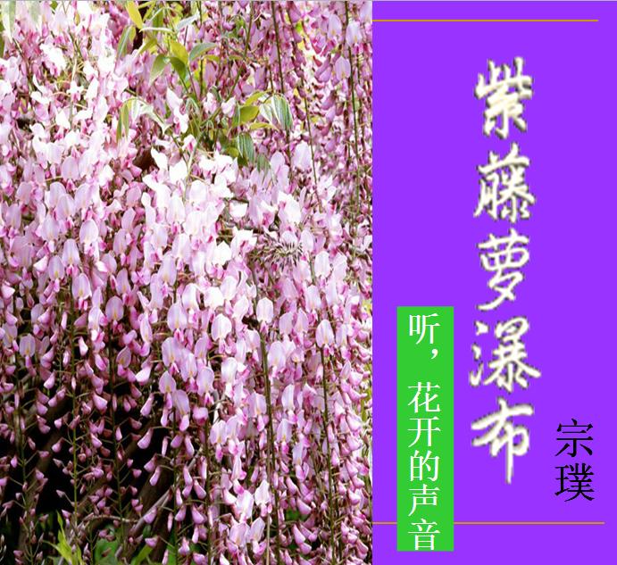 紫藤萝瀑布读后感
