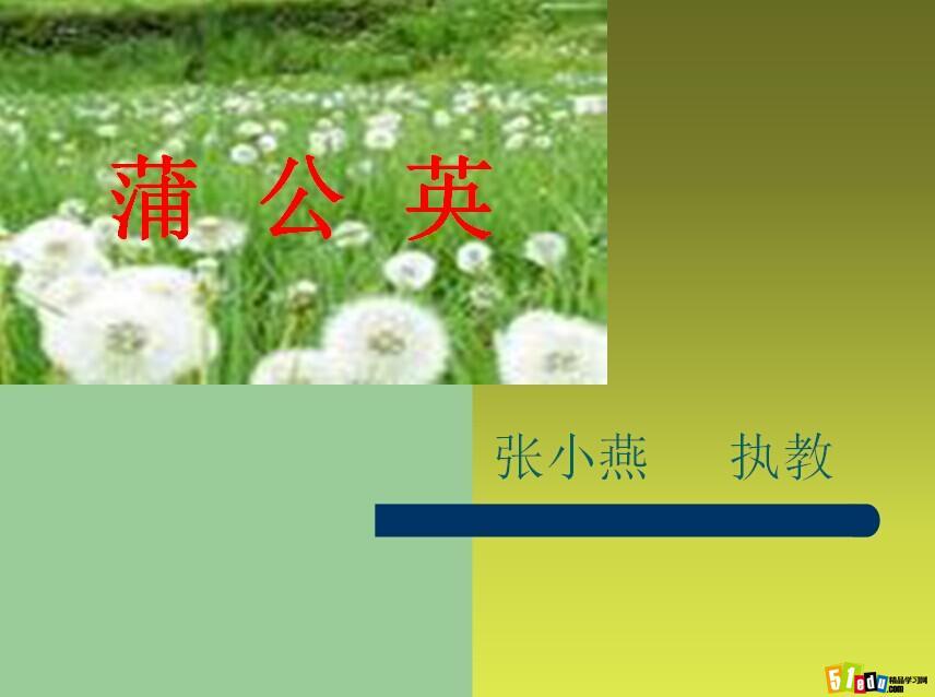 苏教版三年级语文上册课件:蒲公英课件(1)