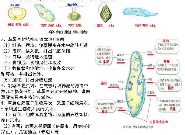 1,单细胞生物:草履虫,酵母菌,,衣藻,眼虫,变形虫 】.