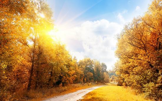 走进秋天:2016年高一写秋天景色的作文
