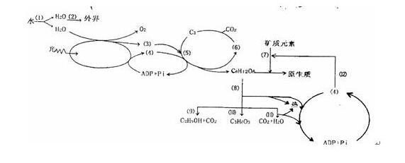 电路 电路图 电子 设计图 原理图 571_231